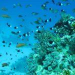 Hurghada, Egipt 91szkoła nurkowania kraków