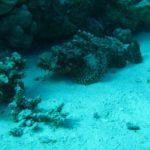 Hurghada, Egipt 97szkoła nurkowania kraków
