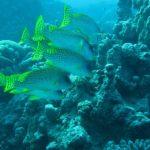 Hurghada, Egipt 98szkoła nurkowania kraków