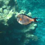 Hurghada, Egipt 111szkoła nurkowania kraków