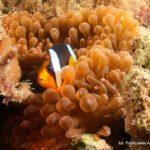 Filipiny 214szkoła nurkowania kraków