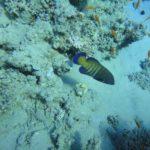 Dahab, Egipt 153szkoła nurkowania kraków