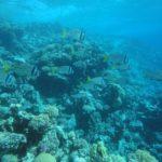 Dahab, Egipt 175szkoła nurkowania kraków