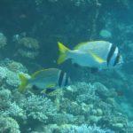Dahab, Egipt 179szkoła nurkowania kraków