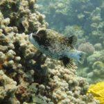 Dahab, Egipt 138szkoła nurkowania kraków