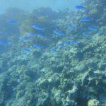 Dahab, Egipt 102szkoła nurkowania kraków