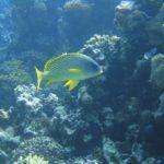 Dahab, Egipt 107szkoła nurkowania kraków