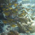 Dahab, Egipt 116szkoła nurkowania kraków