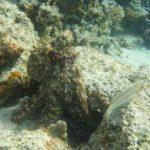 Dahab, Egipt 128szkoła nurkowania kraków