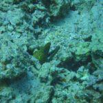 Dahab, Egipt 42szkoła nurkowania kraków