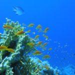 Dahab, Egipt 95szkoła nurkowania kraków