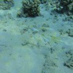Dahab, Egipt 97szkoła nurkowania kraków