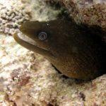 Fauna Morza Czerwonego 85szkoła nurkowania kraków