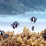 Fauna Morza Czerwonego 29szkoła nurkowania kraków