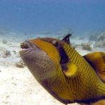 Fauna Morza Czerwonego 45szkoła nurkowania kraków