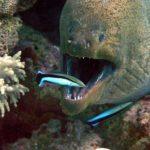 Fauna Morza Czerwonego 86szkoła nurkowania kraków