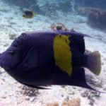 Fauna Morza Czerwonego 84szkoła nurkowania kraków
