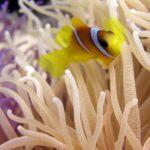 Fauna Morza Czerwonego 7szkoła nurkowania kraków