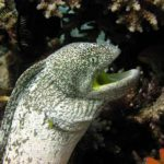 Fauna Morza Czerwonego 18szkoła nurkowania kraków