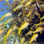 Fauna Morza Czerwonego 1szkoła nurkowania kraków