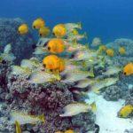 Fauna Morza Czerwonego 13szkoła nurkowania kraków