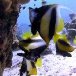 Fauna Morza Czerwonego 11szkoła nurkowania kraków