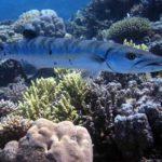 Fauna Morza Czerwonego 2szkoła nurkowania kraków