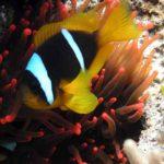Fauna Morza Czerwonego 55szkoła nurkowania kraków