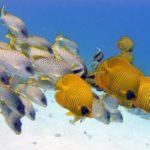 Fauna Morza Czerwonego 37szkoła nurkowania kraków
