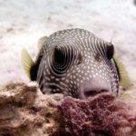 Fauna Morza Czerwonego 4szkoła nurkowania kraków