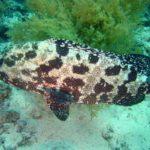 Fauna Morza Czerwonego 56szkoła nurkowania kraków
