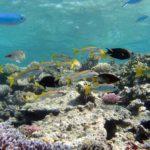 Fauna Morza Czerwonego 33szkoła nurkowania kraków