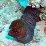 Fauna Morza Czerwonego 17szkoła nurkowania kraków
