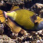 Fauna Morza Czerwonego 24szkoła nurkowania kraków