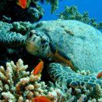 Fauna Morza Czerwonego 51szkoła nurkowania kraków