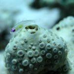Fauna Morza Czerwonego 3szkoła nurkowania kraków