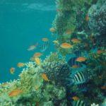 Fauna Morza Czerwonego 54szkoła nurkowania kraków