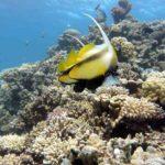 Fauna Morza Czerwonego 73szkoła nurkowania kraków