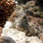 Fauna Morza Czerwonego 48szkoła nurkowania kraków