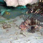 Fauna Morza Czerwonego 40szkoła nurkowania kraków