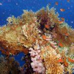 Fauna Morza Czerwonego 72szkoła nurkowania kraków