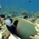 Fauna Morza Czerwonego 15szkoła nurkowania kraków