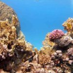 Fauna Morza Czerwonego 71szkoła nurkowania kraków