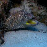 Fauna Morza Czerwonego 36szkoła nurkowania kraków