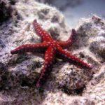 Fauna Morza Czerwonego 60szkoła nurkowania kraków