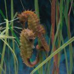Fauna Morza Czerwonego 12szkoła nurkowania kraków