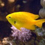 Fauna Morza Czerwonego 58szkoła nurkowania kraków