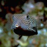 Fauna Morza Czerwonego 52szkoła nurkowania kraków