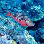 Nassau, Bahamy 39szkoła nurkowania kraków