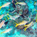 Nassau, Bahamy 41szkoła nurkowania kraków